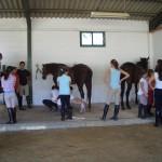 el cuidado del caballo
